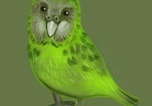 bird-2144530_1280