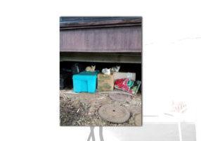 kitties on boxes